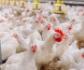 Ministerio de Agricultura: Bienestar en la granja de los animales de producción