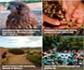 Seis proyectos Life españoles concurren como finalistas a los Premios Natura 2000 de la Comisión Europea