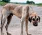 Jornada informativa sobre el protocolo clínico de identificación de maltrato animal, en la sede de Colvema