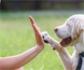 Psicología canina: ventajas de establecer una jerarquía y cómo hacerlo