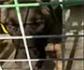 Ceuta se blinda contra la rabia tras el último caso en un perro
