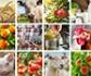 Perspectivas 2020-2030: resiliencia del sector agroalimentario de la UE a pesar de los impactos de la Covid-19