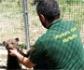 El Seprona investigó o detuvo a 600 personas por maltrato animal en 2018, un 20% más que el año anterior