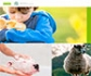 Nuevo espacio dedicado al Bienestar Animal en la página web del Colegio de Veterinarios de Madrid