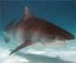 La mayor experta en tiburones del mundo ofrecerá una charla abierta al público en el Oceanogràfic de Valencia