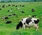 El Gobierno aprueba casi 50 millones de euros para líneas de actuación en agricultura y ganadería