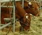 Jornada 'Innovación en la cadena de valor de la alimentación animal',  en la sede de Colvema
