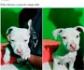 Los veterinarios europeos advierten de los riesgos que supone el comercio online de animales