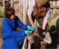 Consumo de antibióticos en Sanidad Animal