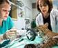 Veterinarios, claves en la labor de los Centros de Recuperación de Fauna Silvestre