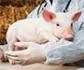Nuevas leyes sobre bienestar animal, salud y clima afectarán al sector alimentario, según un informe