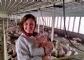 El veterinario garantiza el bienestar animal y la calidad en los alimentos