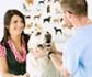 El 37% de clínicas veterinarias de España tiene más clientes que antes de la pandemia, según una encuesta realizada a nivel mundial