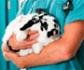 El Portal del Consumidor de la Comunidad de Madrid, informa sobre los centros veterinarios: deberes ante el animal y su propietario y obligaciones de este último