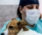 Coronavirus como accidente laboral: Los veterinarios se quedan fuera
