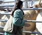 Una veterinaria, gravemente herida en un saneamiento por el golpe de una vaca