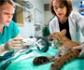 Fauna salvaje, otra salida profesional de la Veterinaria