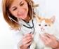 Creadas varias plataformas de veterinarios asalariados con el objetivo de promover la puesta en marcha de un convenio colectivo