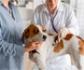 El Hospital Clínico Veterinario Complutense convoca una bolsa para becas de internado avanzado en Emergencia y UCI de pequeños animales