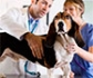 Sociedades protectoras de animales y prestación de servicios veterinarios: la FVE toma medidas para garantizar el bienestar animal