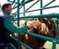 La Organización Colegial Veterinaria exige reforzar las condiciones de seguridad en los saneamientos ganaderos