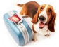 Lo que debe saberse sobre desplazamiento de animales y vacunación antirrábica