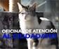 El Centro de Protección Animal del Ayuntamiento de Madrid (Madrid Salud), promueve la adopción responsable