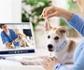 Webseminar gratuito para colegiados y carné joven: 'Telemedicina veterinaria, usos y mejora de la rentabilidad de tu clínica', organizado por Colvema