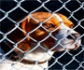 Webseminar gratuito para colegiados y carné joven: bienestar animal en nucleos zoologicos, organizado por Colvema