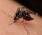 Confirman dos focos de fiebre del Nilo en caballos en la provincia de Cáceres