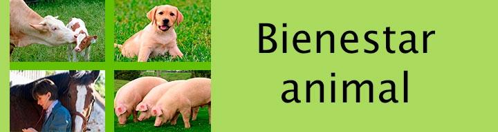 Página de Site beinestar animal